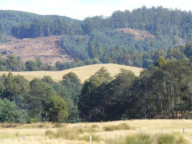 Tasmania Hills