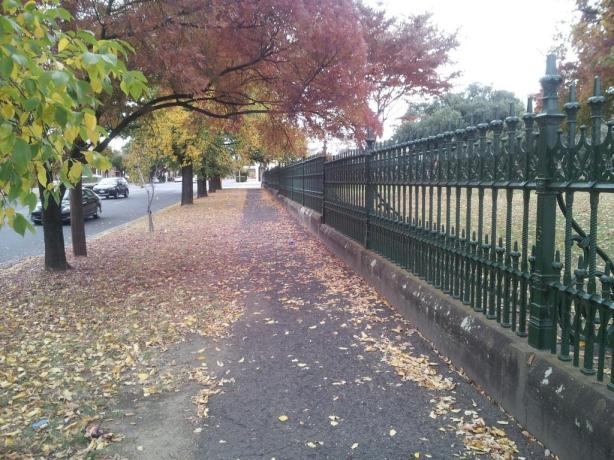 Autumn in Bendigo