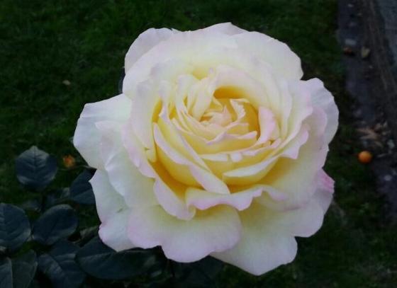 A rose for the forgotten children